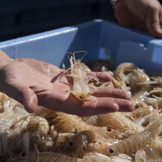 Diputació promociona la dualitat gastronòmica de la costa i l'interior