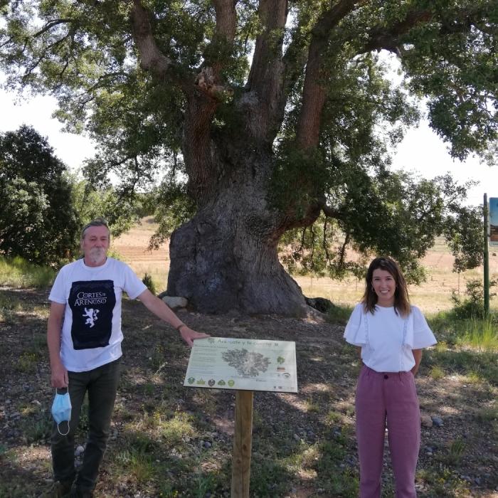 La Diputació posa en valor cinc arbres monumentals de la província amb la instal·lació de panells informatius