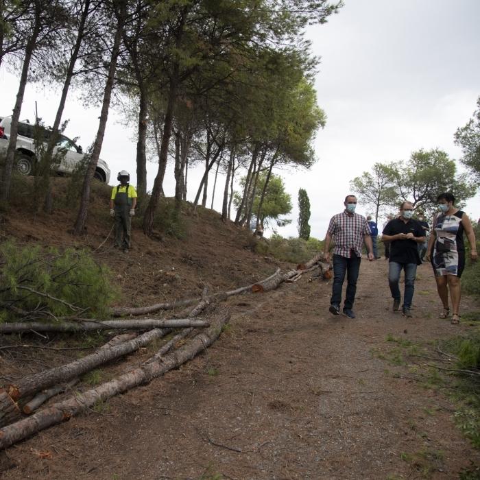La Diputació neteja per primera vegada en 40 anys les zones forestals de Penyeta Roja per a mitigar el risc d'incendis