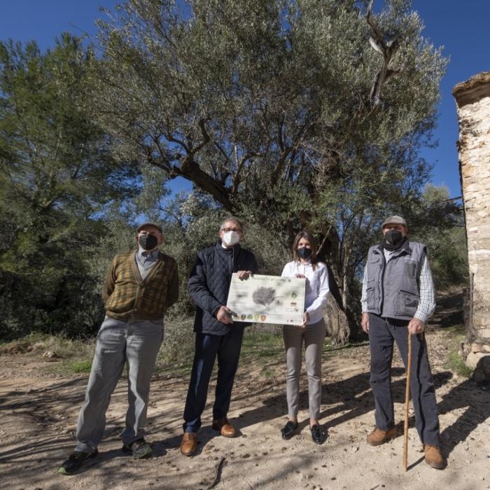 La Diputación celebra el Día del Árbol en Suera con la puesta en valor de 'el olivo de la Campana'