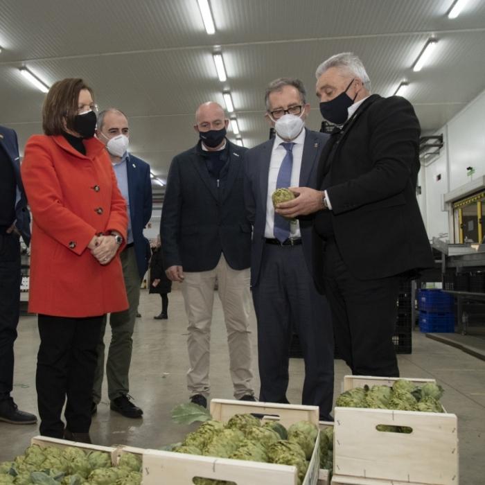 La Diputació subvenciona amb 57.000 euros a la DOP Carxofa de Benicarló per a canviar els plançons afectats pel fong verticillium i recuperar la producció