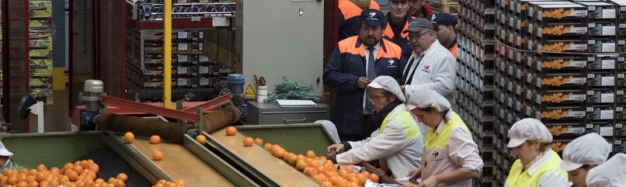 La Diputación impulsa el consumo de cítricos de Castellón en 'Tria Castelló'