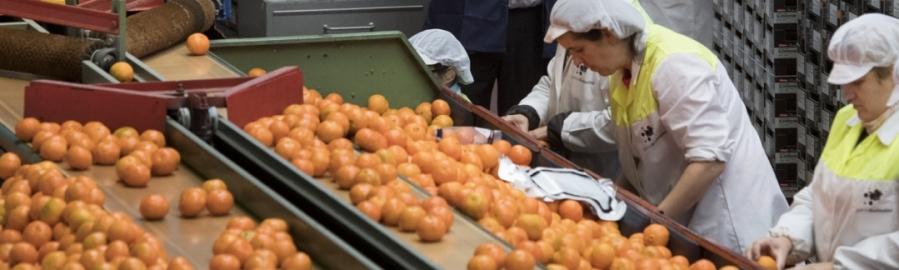 La Diputación apoya al sector agropecuario con especial incidencia en el citrícola