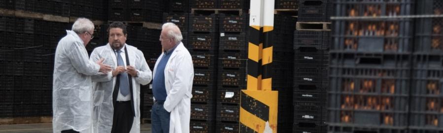 Diputación apoya al desarrollo y competitividad del sector citrícola provincial