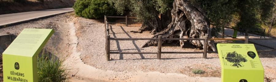 Diputación reforzará la conservación de los 198 árboles monumentales