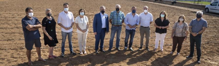 La Diputació amplia la subvenció a la Denominació d'Origen Protegida Carxofa de Benicarló fins als 57.000 euros perquè es puguen substituir les plantacions malaltes
